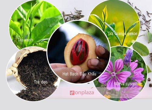 Thành phần trà thảo mộc giảm cân herbalife