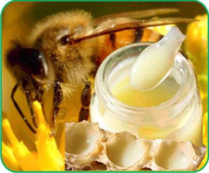 sữa ong chúa, sua ong chua la gi