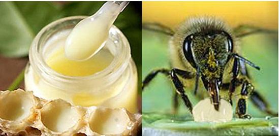 sua ong chua, tac dung sua ong chua