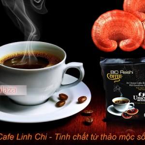 cafe nam linh chi