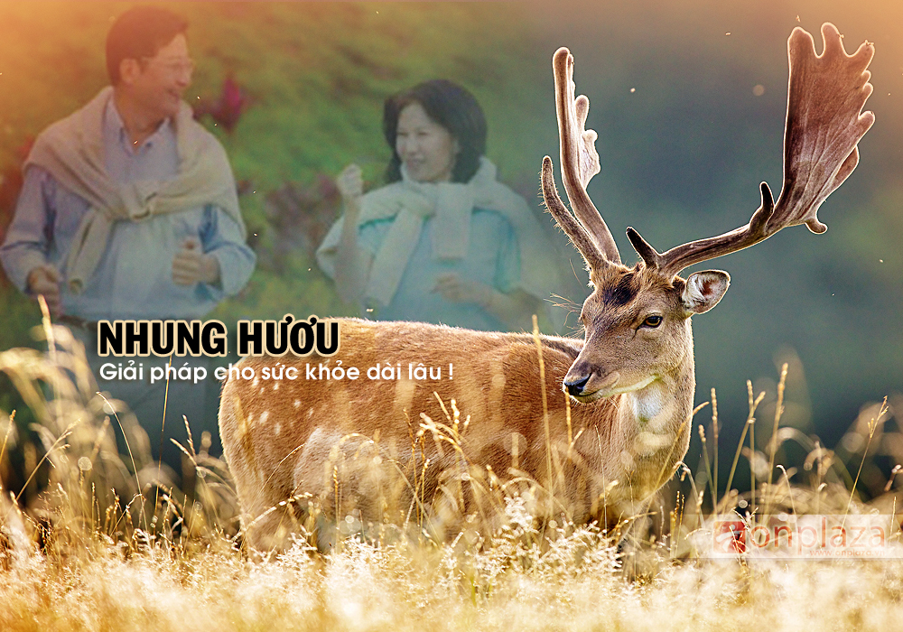 nhung huou chat luong tot,