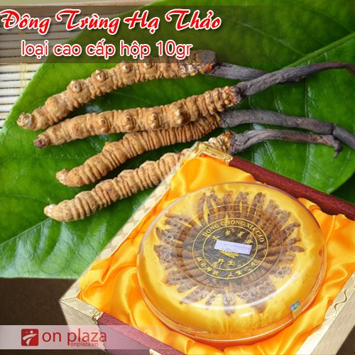 dong-trung-ha-thao-cao-cap-loai-10g-500